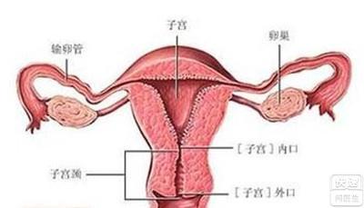 子宫颈纳氏囊肿是什么 浅析子宫颈纳氏囊肿症状及治疗
